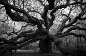 """""""The oak tree in my garden appears to be looking at me now.  It must be more than 400 years old and the only thing it has learned is to stay in one place."""" - Paulo Coelho"""